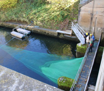 Fischschutz- und Fischabstiegsmaßnahmen