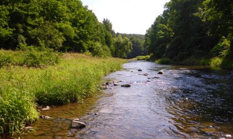 Monitoring, gewässerökologische Untersuchungen & Datenanalyse